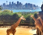 Taronga Zoo – Beneidenswerte Aussicht der Giraffen