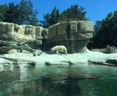 San Diego Zoo – Wohl einer der bekanntesten Zoos weltweit